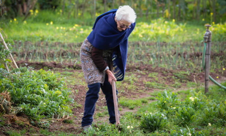 What Are The Health Benefits of Gardening for Seniors